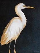 Elegant Heron II