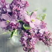 Fresh Morning Bloom