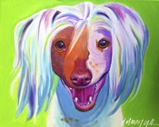 Chinese Crested - Grin