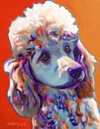 Poodle - Bonnie