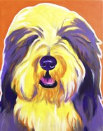 Bearded Collie - Banana