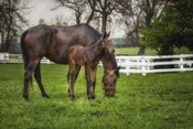 Mare And Foal Together