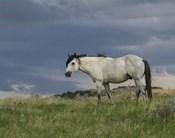 Wild Horse - Stallion (Storm)