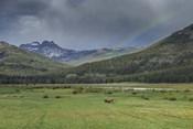 Yellowstone Bison With Rainbow