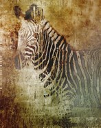 Africa Zebra