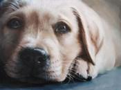 Dog's-Eye View