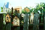 The Neighborhood Watch Patrol