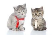 Kittens 16