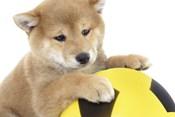 Puppies 13