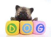Puppies 7