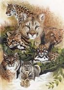 Feline Rhapsody