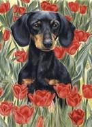 Dachsund In Tulips