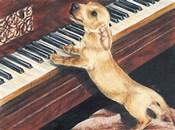 Dachsund Playing Piano