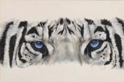 Eye-Catching White Tiger