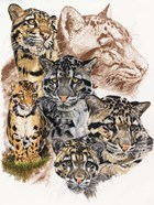 Clouded Leopard with Ghost Image