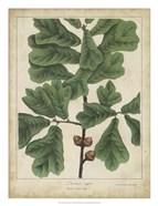 Oak Leaves & Acorns I