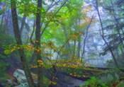 Roaring Fork Fog
