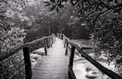 Wooden Bridge In Fog BW