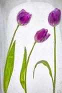 Flores Congeladas 2