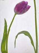Flores Congeladas 3