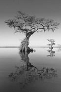 Trees at Lake 2