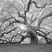The Tree Square BW 2