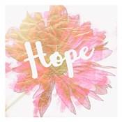 Hope Daisy