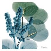 Golden Lilly Of Eucalyptus