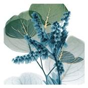 Golden Lilly Of Eucalyptus 2