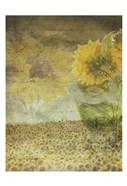 Dear Sunflower Field