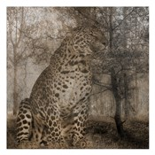 Wild Jungle 1