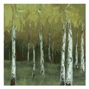 Look In The Woods