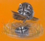 Reflective Racoon - 35A