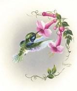 Hummingbird With Trumpet Flowers 2