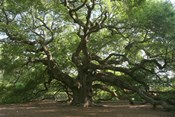 Angel Oak 9098