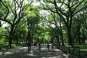 Central Park Mall Summer
