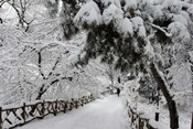 Central Park Path Deep Snow