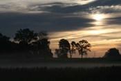 Grey Dawn Wetland