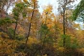 Inwood Manhattan Autumn