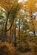 Inwood Park Fall Vertical