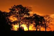 Orange Sunrise Treeline