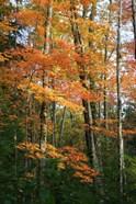 Orange Yellow Fall Vertical 9840