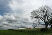 Paddock Tree 8965