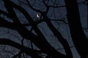 Silhouette Branches Moon Venus