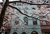 Snowstorm Brownstones Branches