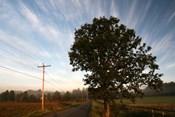 Tree Pole Road Sky 3329