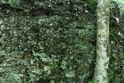 Tree Trunk Rock Wall