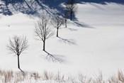 Winter Field Silhouettes