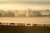 Blue Chip Horse Farm Golden Morning