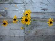 Harvest Table Blackeye Suzies